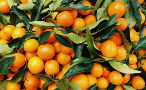 Citrus Processor Process Safety Management and Risk Management Plan